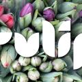 Tulip Banner 1