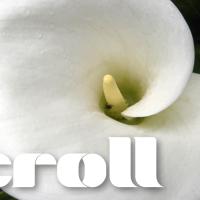 Marsh-Scroll-Banner