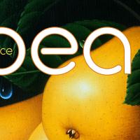 Avocado Sans banner 13a